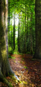 Path Posters - Light Through The Trees Poster by Meirion Matthias