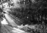 Gravel Road Prints - Light Through The Trees Print by Off The Beaten Path Photography - Andrew Alexander