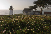 San Mateo County Prints - Lighthouse with Wildflowers Print by George Oze
