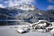 Snow Scene Photos - Lightly Powdered by Chris Brannen
