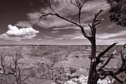 Arizona Lightning Originals - Lightning Striking Tree of the Grand Canyon by Cedric Darrigrand