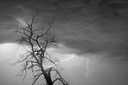 Lighning Prints - Lightning Tree Silhouette 29 Print by James Bo Insogna