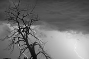 Storms Posters - Lightning Tree Silhouette 38 Black and White Poster by James Bo Insogna