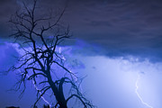 Lightning Bolt Pictures Prints - Lightning Tree Silhouette 38 Print by James Bo Insogna