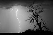 Lightning Bolt Pictures Prints - Lightning Tree Silhouette Black and White Print by James Bo Insogna