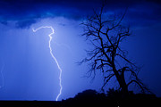 Lightning Bolt Pictures Prints - Lightning Tree Silhouette Print by James Bo Insogna