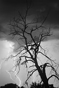 Lightning Wall Art Prints - Lightning Tree Silhouette Portrait BW Print by James Bo Insogna