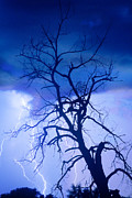 Lightning Bolt Pictures Prints - Lightning Tree Silhouette Portrait Print by James Bo Insogna