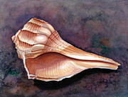 Sea Shell Painting Prints - Lightning Whelk Print by Barbara Jewell