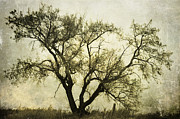 Artist Greeting Cards Prints Art - Likeable  Elm by Jerry Cordeiro