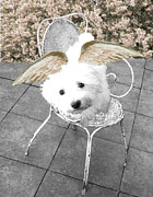 Puppies Digital Art Metal Prints - lil Angels Bichon Frise Metal Print by Tisha McGee