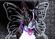 Boston Digital Art Metal Prints - lil Angels Boston Terrier Metal Print by Tisha McGee