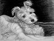 Cuddly Drawings Prints - Lil Man Print by Shelley Blair