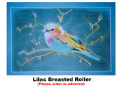 Lilac Drawings Originals - Lilac Breasted Roller by Marie - Helene De Beer