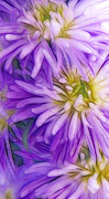 Digital Work Art - Lilac Flowers by Kristin Kreet