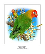 Lovebird Posters - Lilians Lovebird 1 Poster by Owen Bell