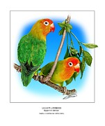 Lovebird Posters - Lilians Lovebird 2 Poster by Owen Bell