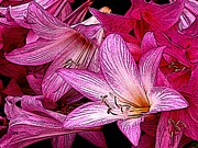 Flora Digital Art Originals - Lilies Illustrated by Ben Freeman