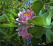 Waterlilies Art - Lilies No. 18 by Anne Klar