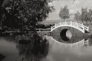 Lili Photos - Liliuokalani Gardens by Peter French - Printscapes