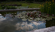 Water Lily Pond Prints - Lillies and Clouds Print by Mike Reid