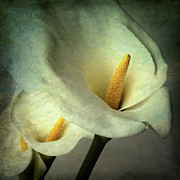 Calla Lily Digital Art Posters - Lillies Poster by Bernard Jaubert