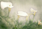 Margaret Hormann Bfa - Lillies in the Mist