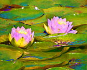 Lilly Pond Digital Art - Lillies by Jeanette Mahoney