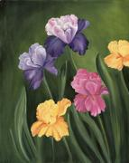 Iris Paintings - Lills Garden by Carol Sweetwood