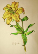 Single Drawings - Lilly by Emily Jones
