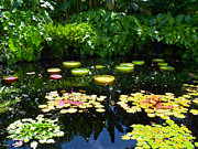 Miami River Photos - Lilly Garden by Carey Chen