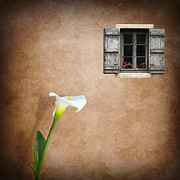 Manipulation Photo Framed Prints - Lilly Framed Print by Ian Barber
