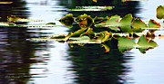 Reflections In River Prints - Lilly Pad Dreams Print by Jeanette C Landstrom