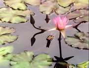 Peggy Mars - Lilly Pond Maui