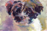 Havanese Paintings - Lilly Pup by Kimberly Santini