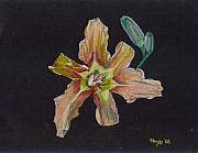 Flower Pastels - Lily 2 by Mendy Pedersen