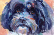Havanese Framed Prints - Lily Adult Framed Print by Kimberly Santini