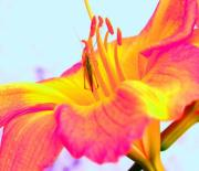 Stamen Digital Art - Lily and Guest by Torri Bates