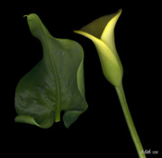 Heather Kirk - Lily and Leaf Number Two