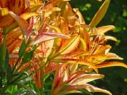 Lilies Art - Lily Flowers Floral Garden prints Baslee Troutman by Baslee Troutman Fine Art Prints