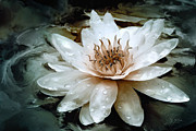 Flower Mixed Media Prints - Lily Light Print by Joel Payne