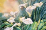 Calla Lilly Posters - Lily Light Poster by Tara Moorman