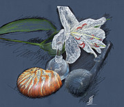 Rosy Hall Pastels Prints - Lily nautilus and glass  Print by Rosy Hall