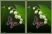 Crossview Framed Prints - Lily of the Valley - Gently cross your eyes and focus on the middle image Framed Print by Brian Wallace
