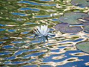 Rob Nelms - Lily Pad Flower