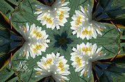 Palatka Prints - Lily Pad Kaleidoscope Print by Nita Hastings