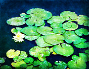 Lilly Pad Acrylic Prints - Lily Pads and Lotus Acrylic Print by Tammy Wetzel