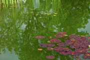 Russet Prints - Lily Pads Print by Bonnie Bruno
