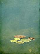Pond Photography Photos - Lily Pads by Francois Dion