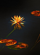 Midnight Digital Art Posters - Lily Pads on Midnight Black Poster by Bill Tiepelman